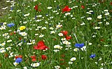 'Grow wild' Flower seeds - Flickr - gailhampshire.jpg