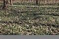 «Олександрія» Барвінок IMG 1610.jpg
