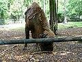 Żubr kaukaski (górski) - Bison bonasus caucasicus - Wisent (European bison) - Wisent (Europäische Bison) (2).JPG