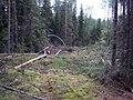 Воровство леса в Вельском районе - panoramio.jpg
