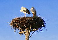 Гнездо аиста в селе 05 crop.jpg