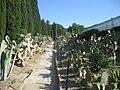 Експозиция на кактуси и сукуленти.jpg