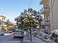 Зима в Афинах - panoramio (1).jpg