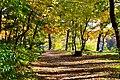 Золота осінь в Пущі.jpg