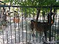 Зоологічний парк - вольєери.jpg