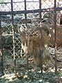 Зоологічний парк - тварини.jpg
