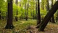 Измайловский лесопарк, деревья.jpg