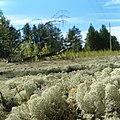 Лишайниковый ковер - panoramio.jpg
