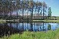 Отражение деревьев в лесном озере.jpg