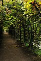 Пергола-(Верхний сад, Петергоф).jpg