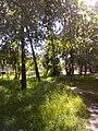 Прилуцький дендропарк Прилуцький район, м. Прилуки, вул. Вавилова, 16 74-107-500 04.jpg