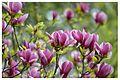 Флора в Ботанічному 12.jpg