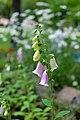 Цветы в парке Шевченко DSC 5231.jpg