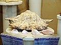 حیوانات تاکسی درمی شده - موزه تاریخ طبیعی شهر قم 03.jpg