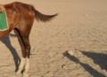ساقا حصان 10.PNG