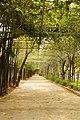 วัดป่ากุง - panoramio (2).jpg
