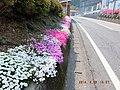 さつきが咲く道 - panoramio.jpg
