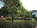 丰镐房里的花园 - panoramio (2).jpg