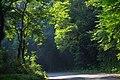 森の抜け道 - panoramio.jpg