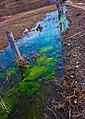 浅滩湿地——2012-4-4 - panoramio.jpg