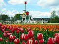 砺波のチューリップ (Tulip Festival in Tonami) 29 Apr, 2011 - Panoramio 52075886.jpg