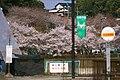 蘇水公園の桜 (岐阜県加茂郡八百津町) - Panoramio 50827396.jpg