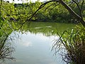 雪霸國家公園遊客中心生態池 Ecological Pond - panoramio (1).jpg
