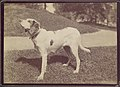 -Dog- MET DP115230.jpg