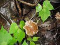 ... mushroom (3893005166).jpg
