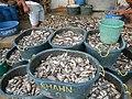 0332jfPanasahan Fishes City of Malolos Bulacan Fishportfvf 12.jpg