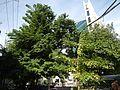 09838jfUnited Nations Avenue Landmarks Schools Ermita Paco Manilafvf 02.jpg