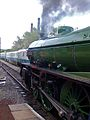 1306 Mayflower at Barrowhill (13).jpg
