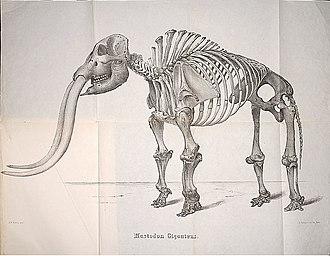 John Henry Bufford - Image: 1852 Mastodon Warren Nutting Bufford Smithsonian SIL7 235 11