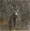 1923-Antonio-Mosca-a-Castel-Telvana-foto.jpg
