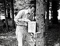 1958. Dr. J.A. Rudinsky (OSU) releasing Laricobius erichsonii (a balsam woolly adelgid predator) adults in Avery Park. Corvallis, Oregon. (33549847186).jpg