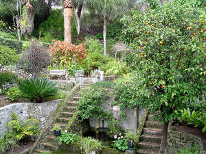 Gibraltar Botanic Gardens - The Dell in the heart of La Alameda Gardens