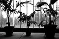 2006-02-16 - United Kingdom - England - London - Kew Gardens - Greenhouse - Potted Plants - Black an 4888672526.jpg