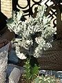 2010. Выставка цветов в Донецке на день города 59.jpg