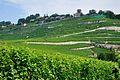 2012-08-12 10-21-50 Switzerland Canton de Vaud Rivaz.JPG