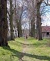 20120408266DR Hoppenrade (Löwenberger Land) Allee am Schloß.jpg