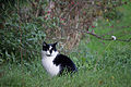 20141102- Black and White Cat by sebaso 05.jpg