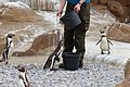 2015-05-24 Vogelpark Marlow 14.jpg
