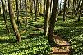 2019-04-22 112107 Naturwald Saubrink Oberberg.jpg