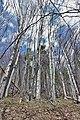21-240-5022 Ждимирський лісовий заказник.jpg