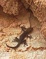 4)faune d'El kantara(Algerie).jpg