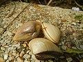 4087Ants Common houseflies foods delicacies of Bulacan 04.jpg