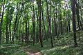 46-101-5015 Lvivskyi Reserve RB.jpg