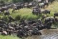 9109 Serengeti migation JF.jpg