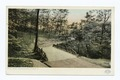 A Bridge in Schenley Park, Pittsburgh, Pa (NYPL b12647398-66552).tiff