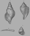 A Treatise on Geology, plate 14.png
